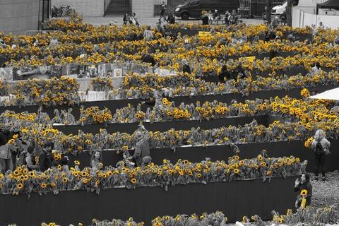 Me cung hoa huong duong dep xieu long truoc bao tang Van Gogh o Ha Lan hinh anh 7