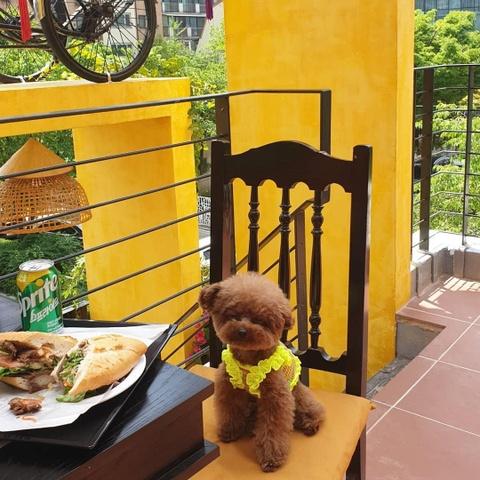 Nguoi Han Quoc thich thu check-in quan banh mi Phuong o Seoul hinh anh 14