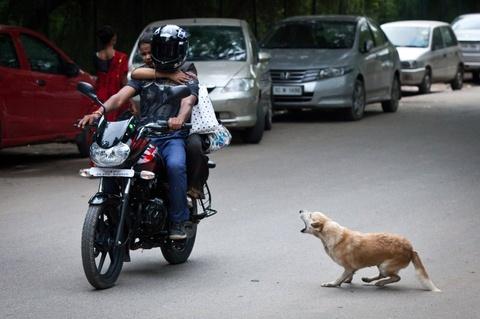 Benh dai o An Do: Cuoc chien khoc liet khong hoi ket hinh anh 2