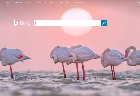 Microsoft tra tien cho nguoi su dung Bing hinh anh