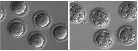 Dot pha lon: Cac nha khoa hoc chinh sua duoc gen trong phoi thai hinh anh 1