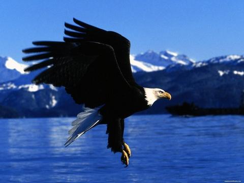 Alaska: 'Kho bau xa xoi' cua My va hoai niem buon cua nguoi Nga hinh anh
