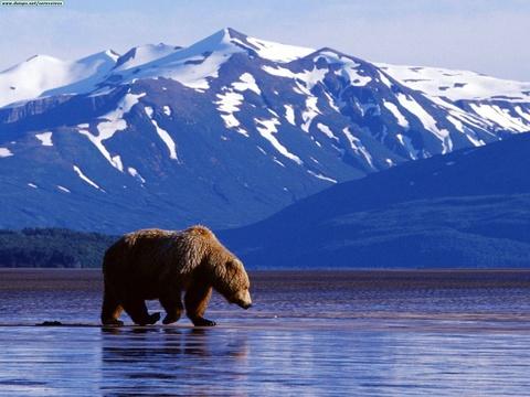Alaska: 'Kho bau xa xoi' cua My va hoai niem buon cua nguoi Nga hinh anh 1