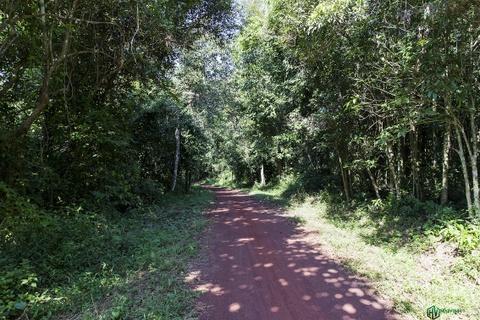 Trekking 7 km xuyen rung va cam trai trong long ho Tri An hinh anh 4