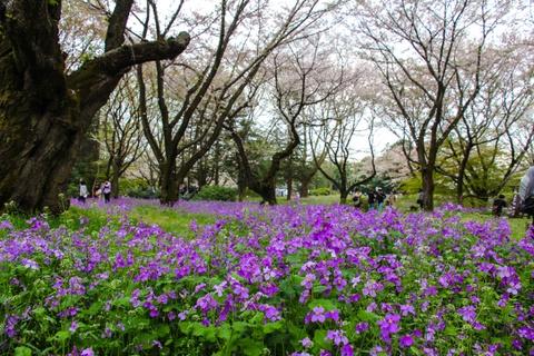 Thien duong hoa o cong vien mang ten Nhat hoang Hirohito hinh anh 9