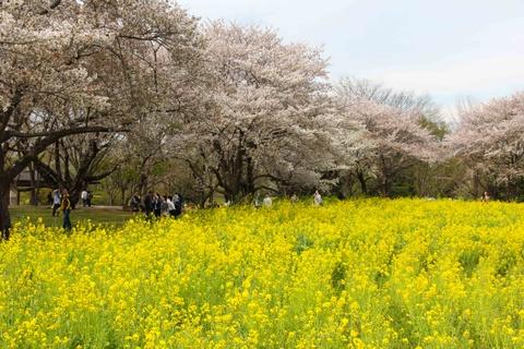 Thien duong hoa o cong vien mang ten Nhat hoang Hirohito hinh anh 11