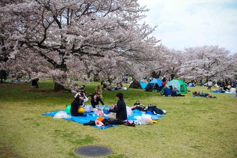 Thien duong hoa o cong vien mang ten Nhat hoang Hirohito hinh anh 12