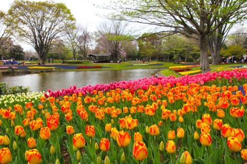 Thien duong hoa o cong vien mang ten Nhat hoang Hirohito hinh anh 5