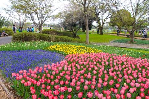 Thien duong hoa o cong vien mang ten Nhat hoang Hirohito hinh anh 6