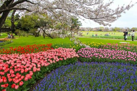 Thien duong hoa o cong vien mang ten Nhat hoang Hirohito hinh anh 7