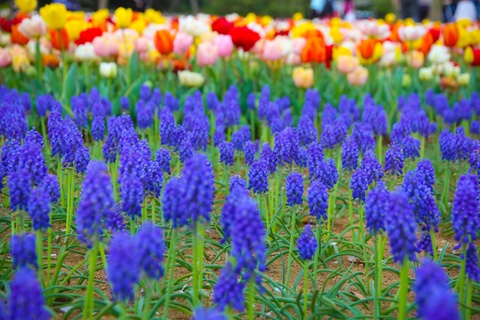 Thien duong hoa o cong vien mang ten Nhat hoang Hirohito hinh anh 8