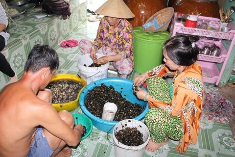 Bat oc buou vang: Lam choi, an that hinh anh