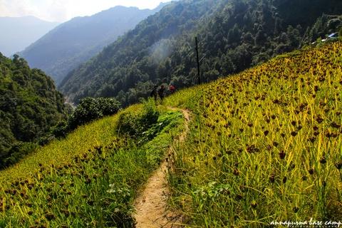 Bi kip tu tuc chinh phuc duong nui Annapurna cho nguoi Viet hinh anh 12