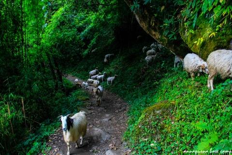 Bi kip tu tuc chinh phuc duong nui Annapurna cho nguoi Viet hinh anh 14