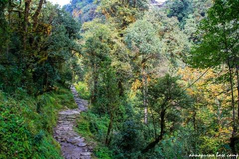 Bi kip tu tuc chinh phuc duong nui Annapurna cho nguoi Viet hinh anh 5