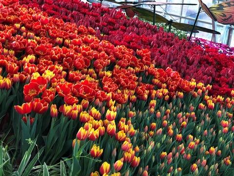 Muon hoa khoe sac don Tet trong khu vuon rong 35.000 m2 hinh anh