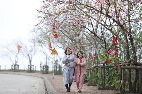 Ngam hoa dao, tulip den no ro o Sa Pa hinh anh 3