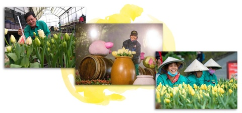 Xu so dieu ky cua trieu doa hoa tulip hinh anh 7