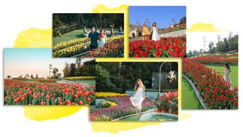 Xu so dieu ky cua trieu doa hoa tulip hinh anh 9