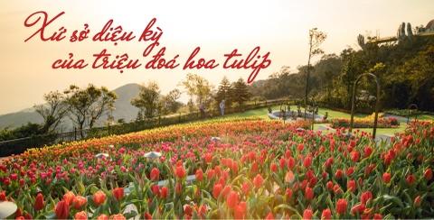 Xu so dieu ky cua trieu doa hoa tulip hinh anh 2