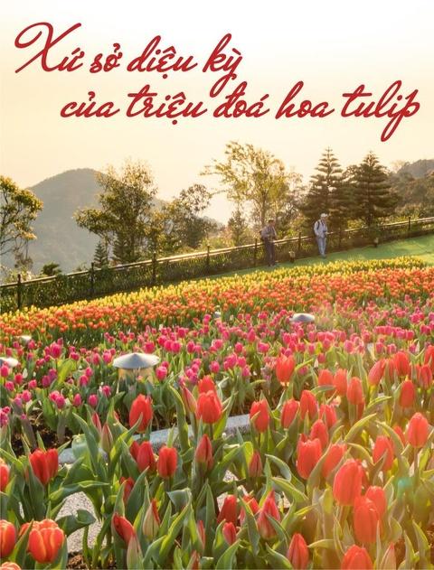 Xu so dieu ky cua trieu doa hoa tulip hinh anh 1