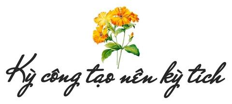 Xu so dieu ky cua trieu doa hoa tulip hinh anh 6