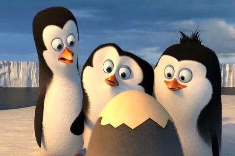 Cuoi da doi voi 'Biet doi chim canh cut vung Madagascar' hinh anh