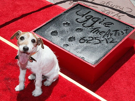 uggie hinh anh