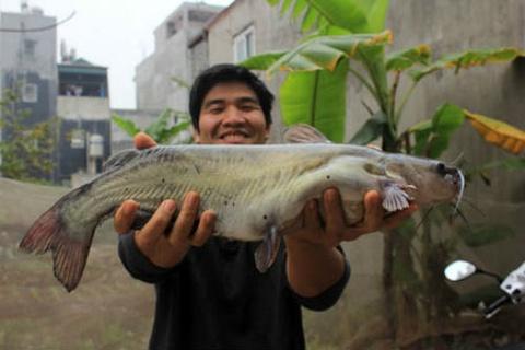 San Ca Doi Doi O Vung Long Ho Thuy Dien Ban Ve Hinh Anh