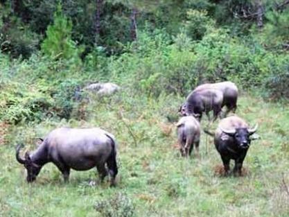 Lam Dong xay dung Safari 1.000 ty dong hinh anh