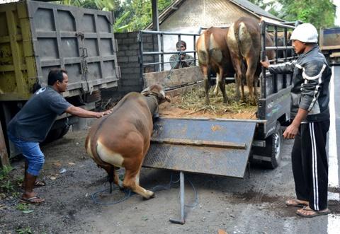 10.000 nguoi di tranh nui lua phun trao o thien duong du lich Bali hinh anh 6