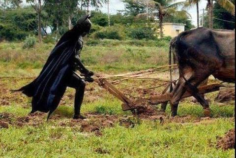 Chum tranh vui ve Batman hinh anh