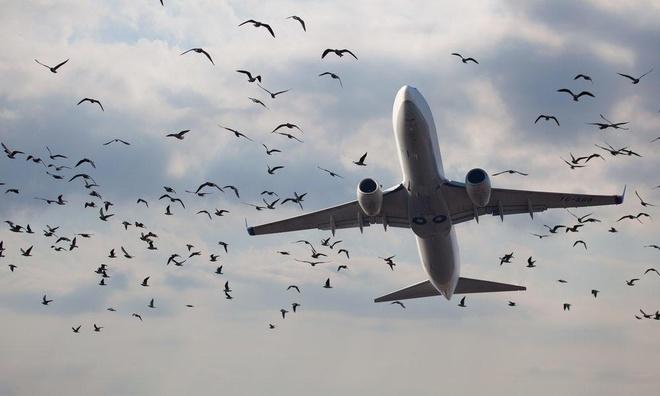 Chuyen gi xay ra khi chim dam vao may bay? hinh anh