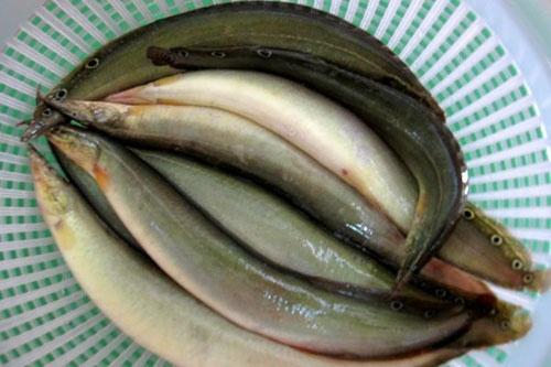 cá chạch chữa yếu sinh lý