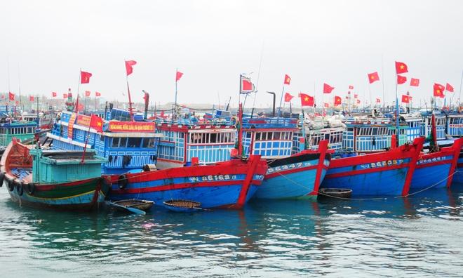 Hang nghin ngu dan Quang Ngai tam hoan chuyen bien dau nam hinh anh 1