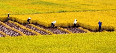 Nong nghiep Viet: Chi 10 trieu nong dan xong ra san xuat hinh anh 1