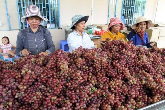'Nu hoang' Ninh Thuan lam thang tram hinh anh 2