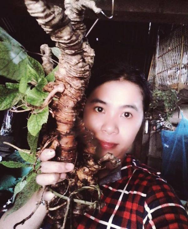 Di rung dao duoc cu sam Ngoc Linh co 250 trieu dong hinh anh 2