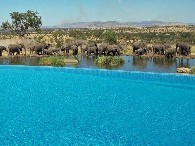Bể bơi bốn mùa Safari Lodge Serengeti ở Tanzania là nơi bạn có thể vừa bơi vừa xem những chú voi cũng đang tắm táp tại ngay hố nước cạnh đó.