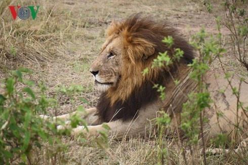 Du lich Kenya: Di xem su tu san moi hinh anh 1