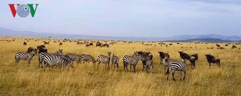 Du lich Kenya: Di xem su tu san moi hinh anh 12