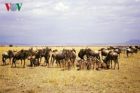 Du lich Kenya: Di xem su tu san moi hinh anh 13