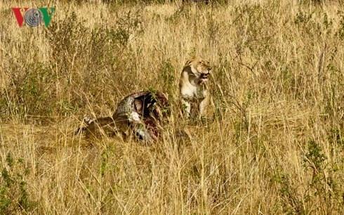 Du lich Kenya: Di xem su tu san moi hinh anh 3