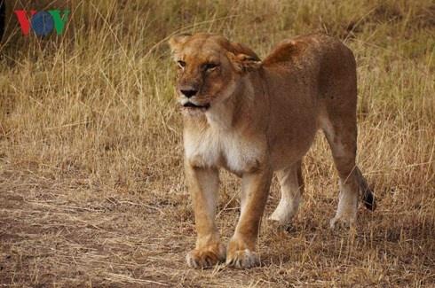 Du lich Kenya: Di xem su tu san moi hinh anh 4