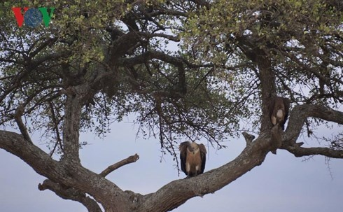 Du lich Kenya: Di xem su tu san moi hinh anh 5