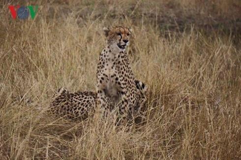 Du lich Kenya: Di xem su tu san moi hinh anh 6