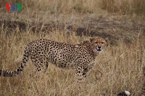 Du lich Kenya: Di xem su tu san moi hinh anh 7