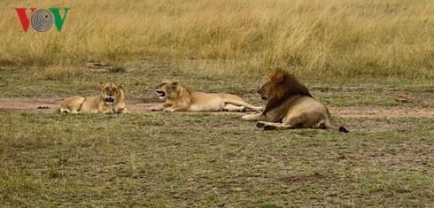 Du lich Kenya: Di xem su tu san moi hinh anh 8