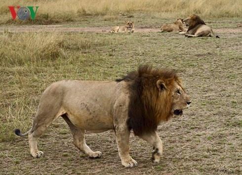 Du lich Kenya: Di xem su tu san moi hinh anh 9