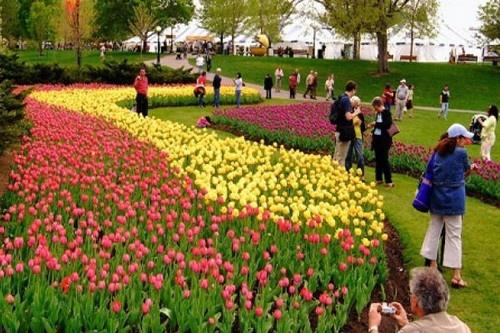 8 le hoi hoa tuyet dep tren the gioi hinh anh 5 Lễ hội hoa Tulip, Canada: Lễ hội này được tổ chức vào tháng 5 hằng năm tại thủ đô Ottawa, thu hút được hàng triệu du khách đến tham quan.